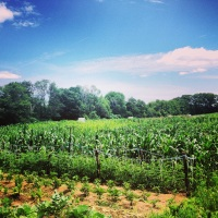 Dunbarton Crops - July 2013 (filtered)